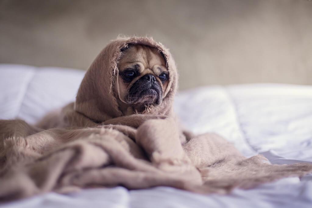 Anti-allergenic Blankets